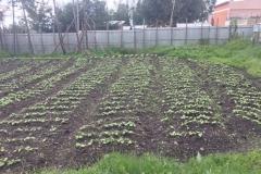 3.3.16 - rotary gardens - IMG_2298