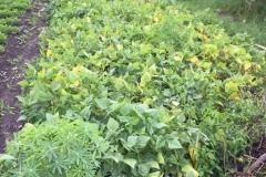 3.3.17 - Rotary gardens -IMG_2294