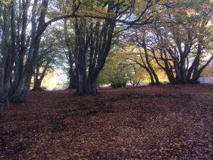 TC1 - l'immagine di un bosco con i suoi profumi